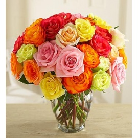 Multicolored Roses