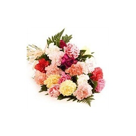Favourite Carnations