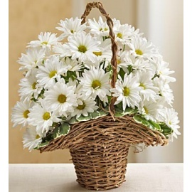 Basket Full of Daisies