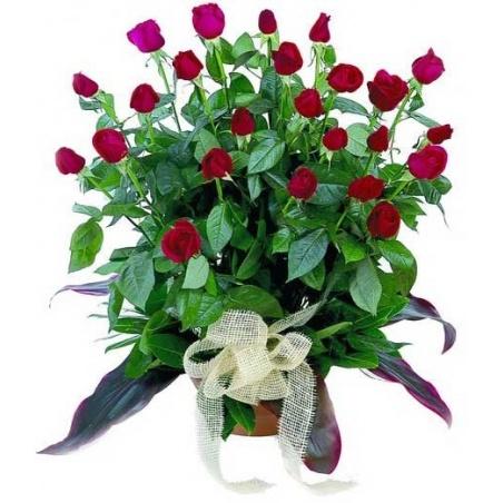 Forever - arrangement of roses